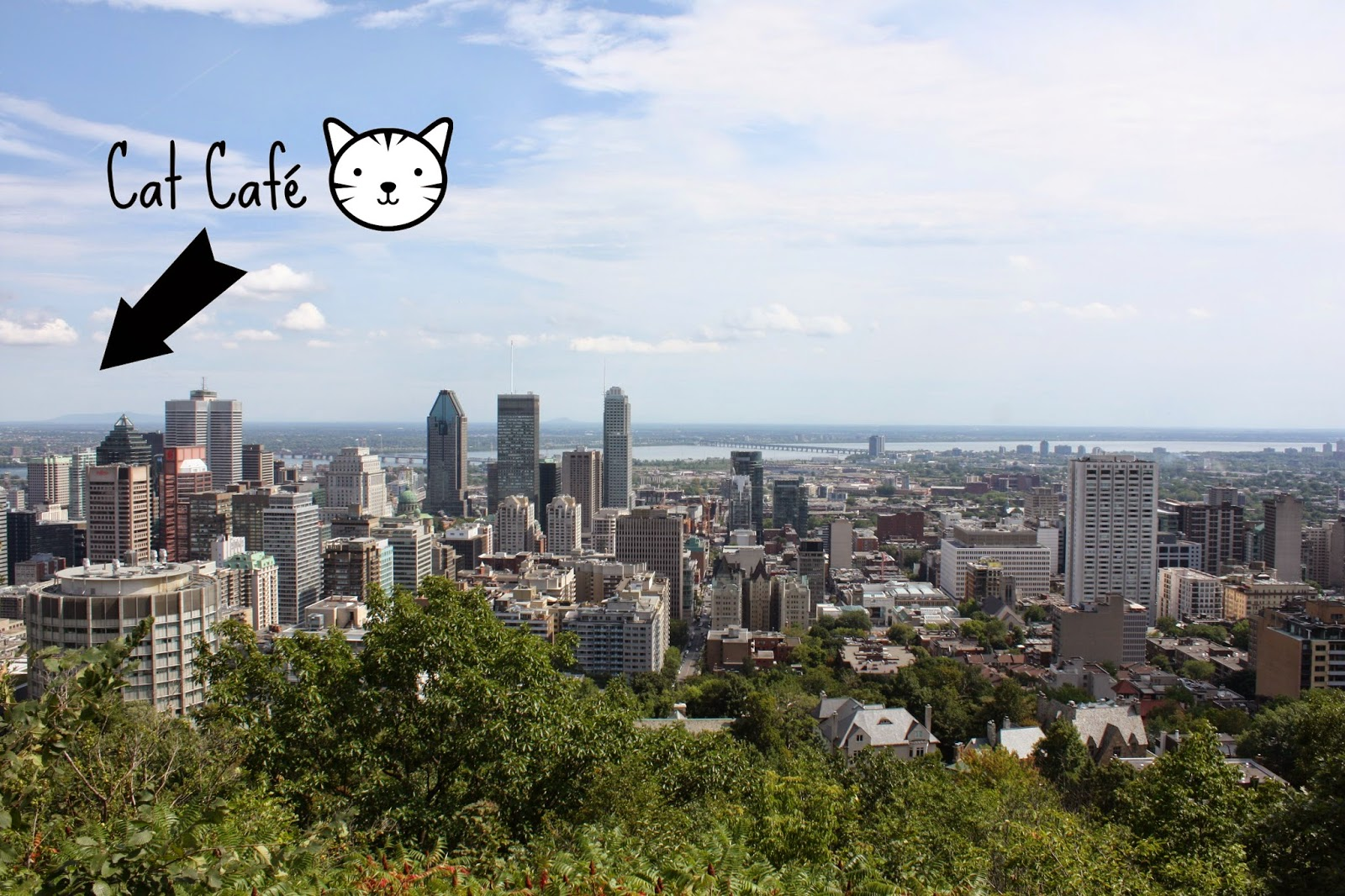 Montreal Cat Cafe