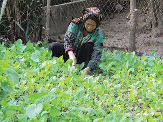 """Báo động xuất khẩu lao động """"chui"""" ở Điện Biên"""