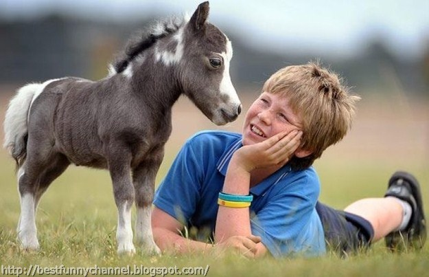 Small horse and kid.