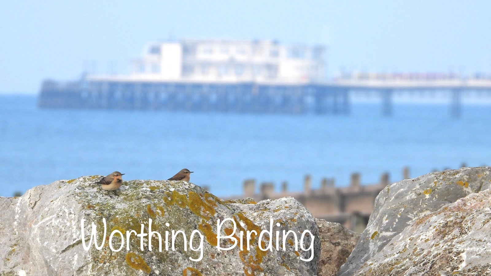 Worthing Birding and Wildlife