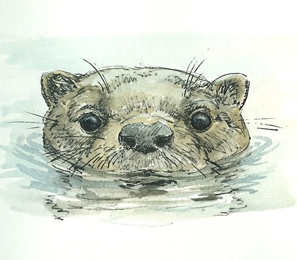 Swimming Otter ...
