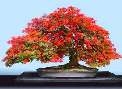 todo bonsai enero 2012