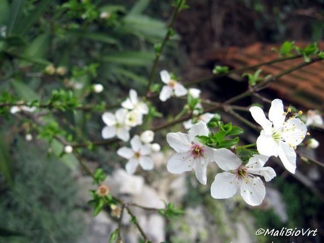 Rascvijetalo proljeće