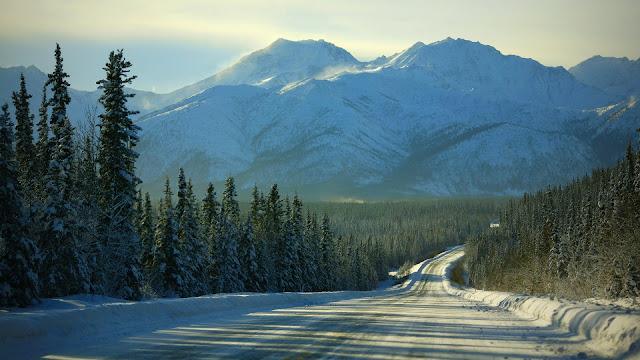 Winter forest road HD Wallpaper