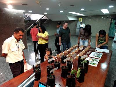 Empresa de consultoria ambiental do Tocantins expõe mudas e sementes nativas do cerrado.