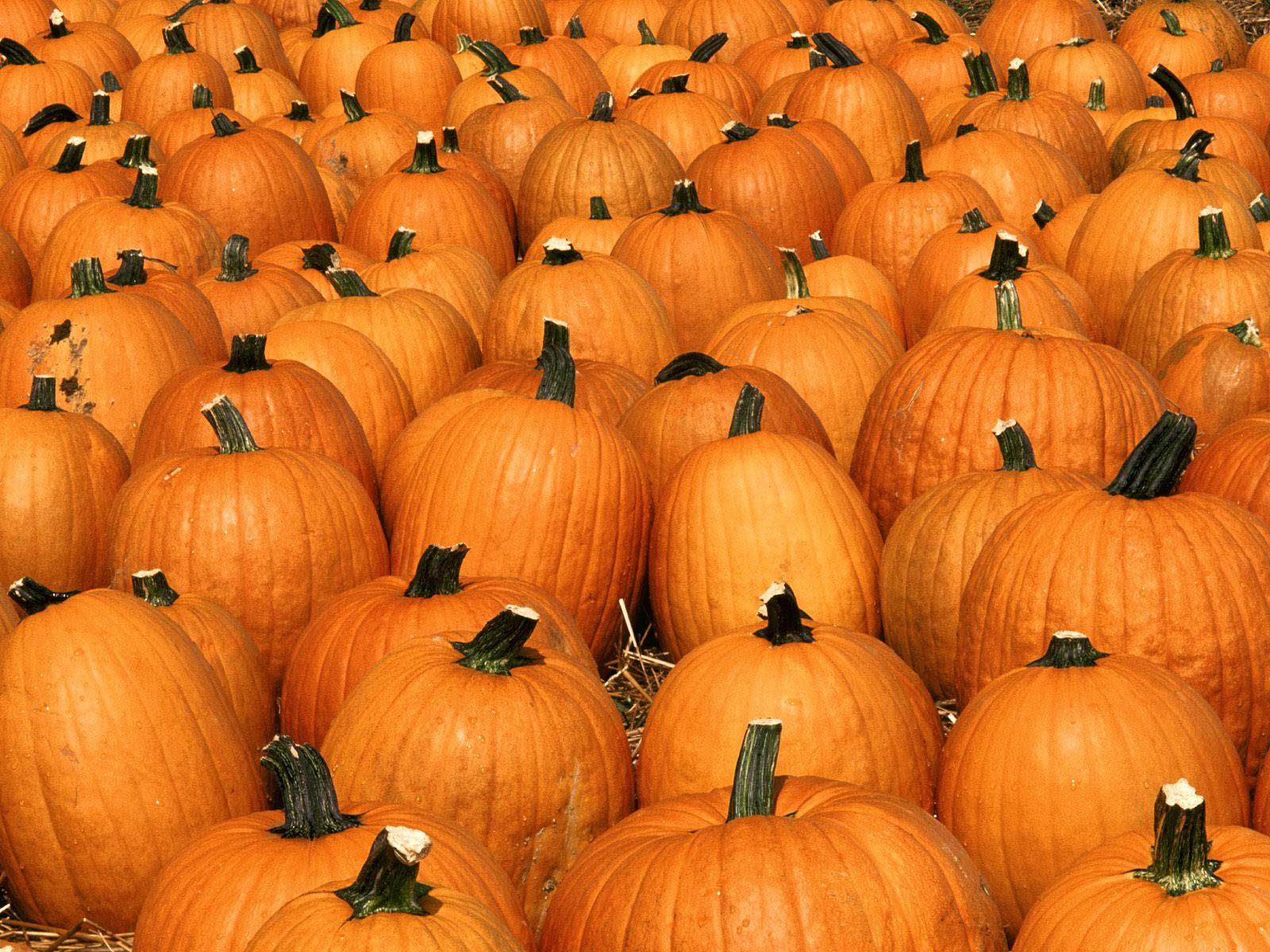 3d pumpkin wallpaper - photo #32
