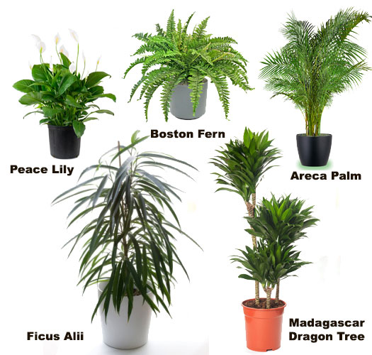 Chiropractic care ltd house plants and your health - Names of indoor plants ...