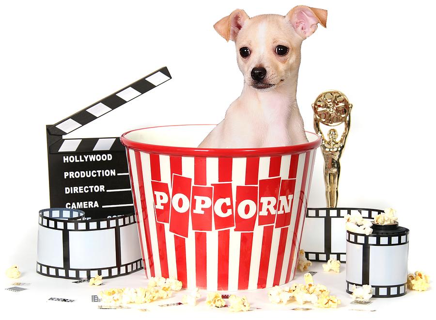 Popcorn Movie And Chihuahua Dog