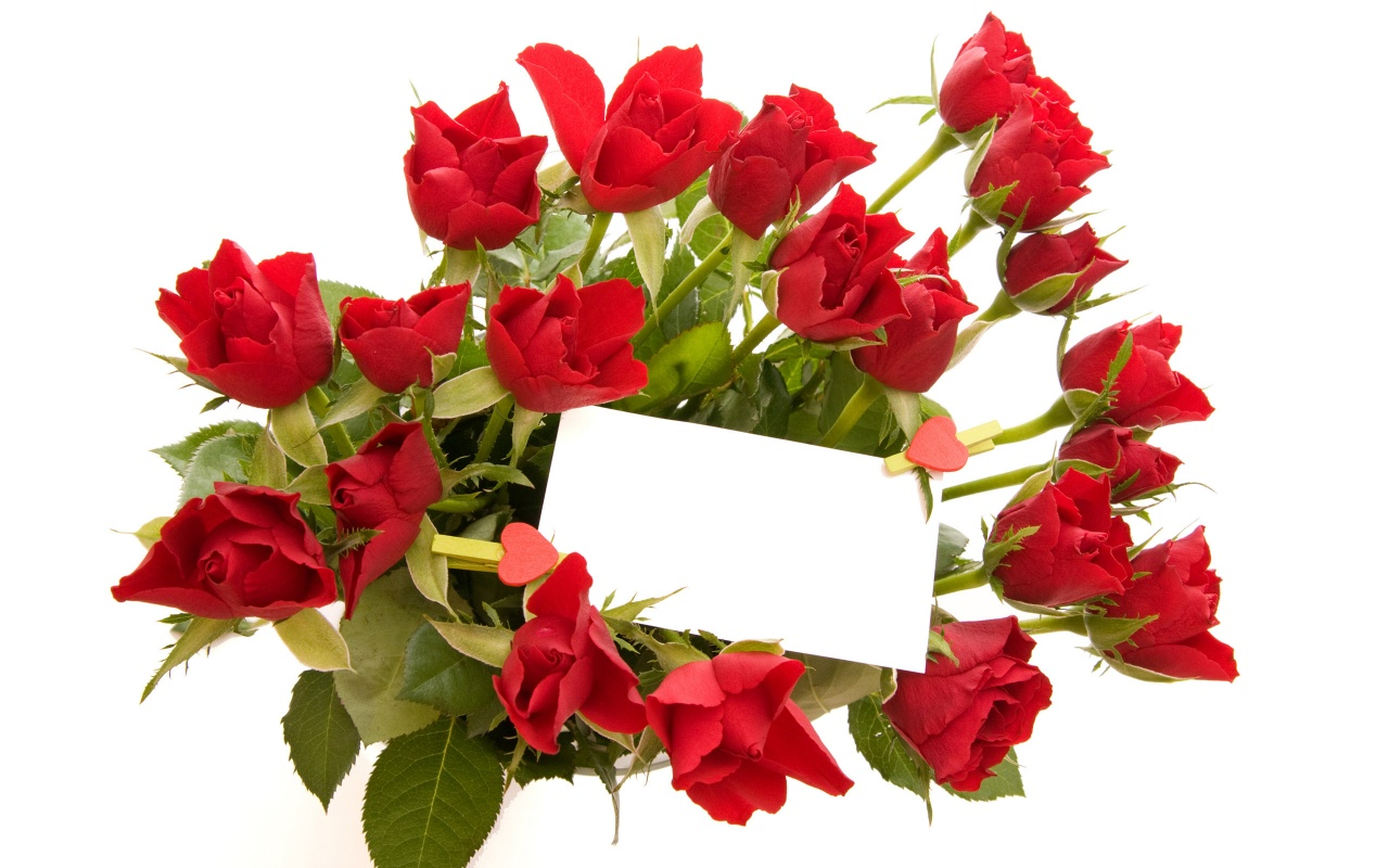 Rosas Rojas Wallpapers