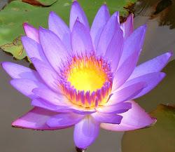 Yoga - Meditação - Cura