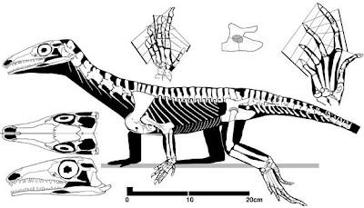 esqueleto de Protorosaurus