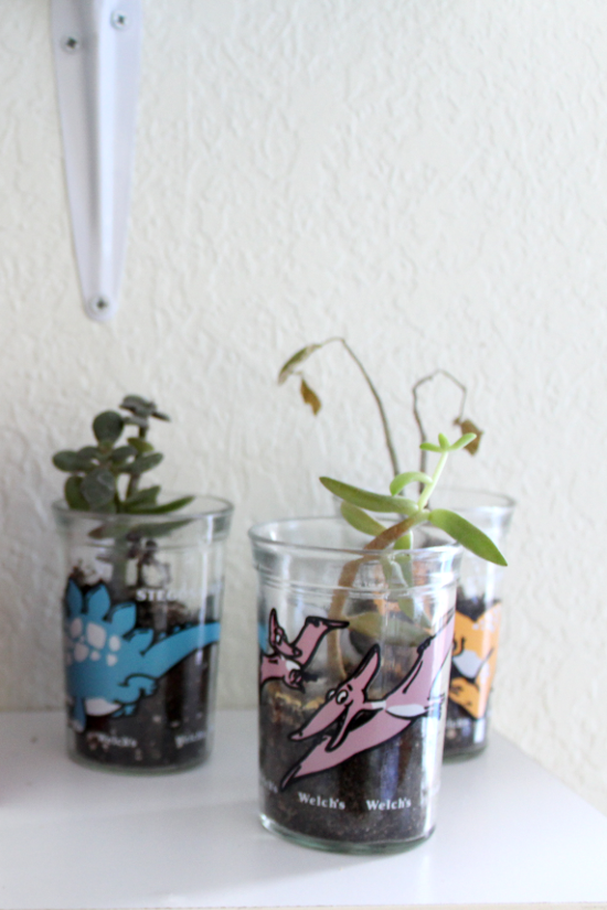 Vintage Welch's jelly jars with succulent plants