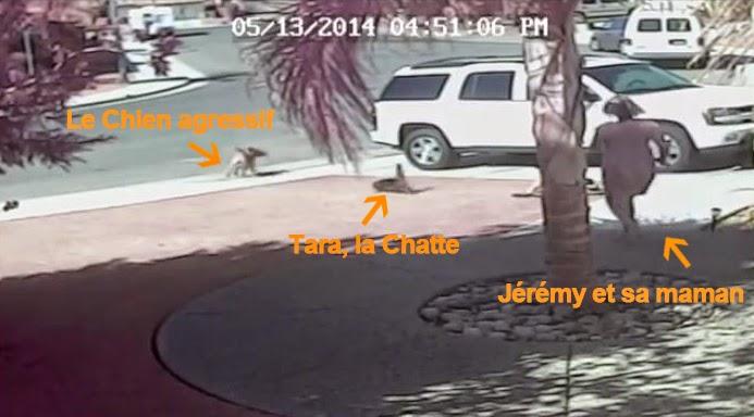 Scrappy, le chien agressif chassé par un chat, a été euthanasié