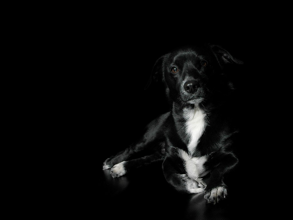Black Dog Wallpapers   Wallpaper Zone