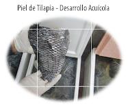 Piel de Tilapia - Desarrollo Acuícola