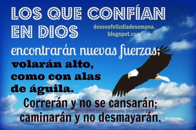 Confía en Dios y tendrás nuevas fuerzas. Buenos deseos feliz día, versículos bíblicos, mensajes cristianos para amigos, facebook. citas bíblicas, los que esperan en Jehová levantarán alas como águilas.