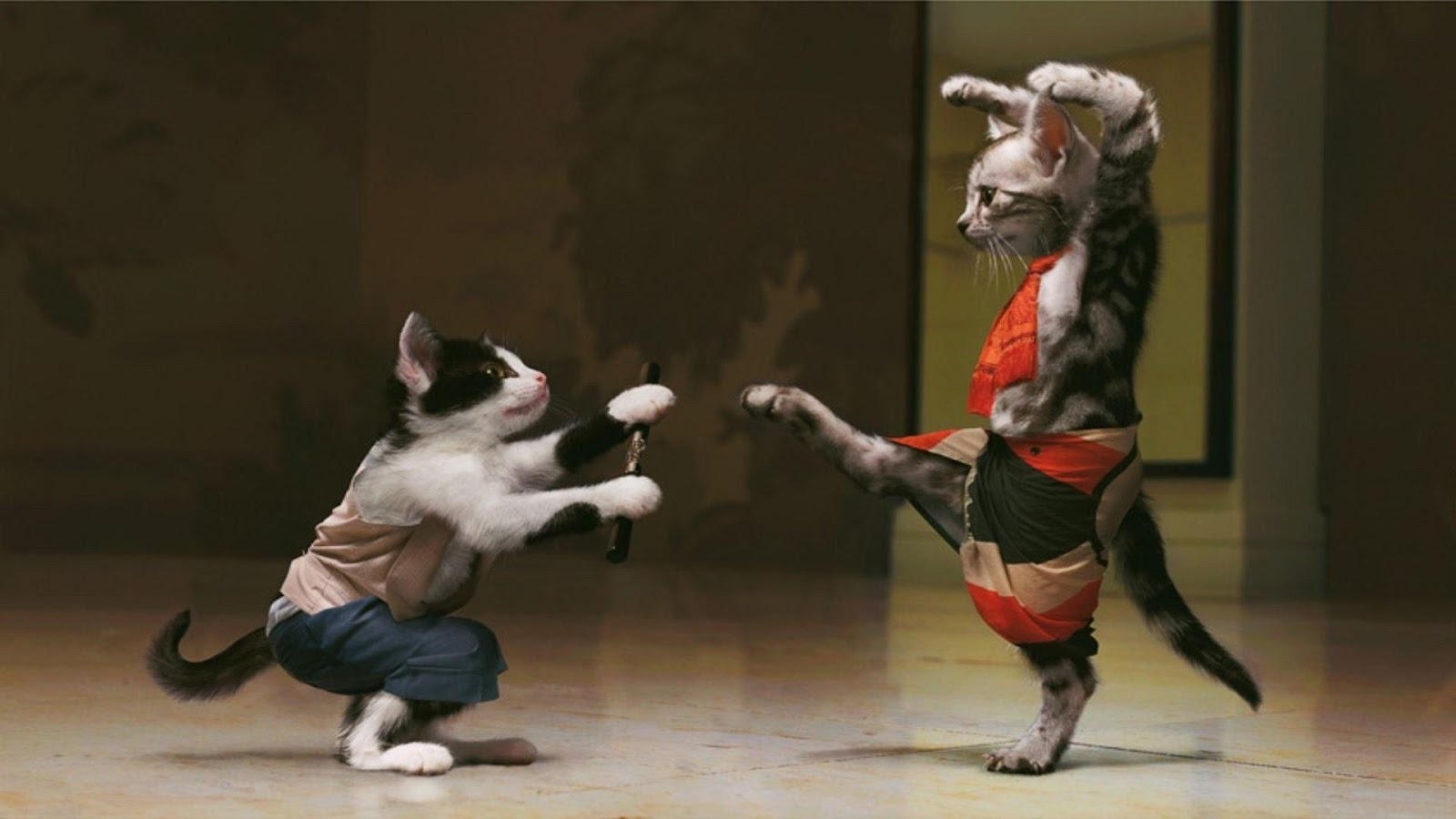 Funny animals cats fighting