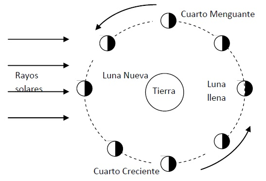 Dibujo fases luna para niños - Imagui