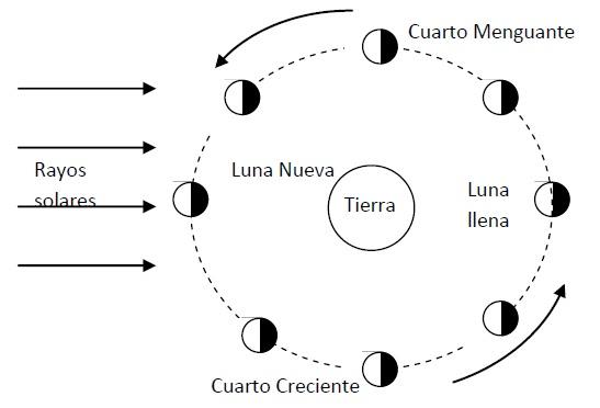 Menta Más Chocolate - RECURSOS PARA EDUCACIÓN INFANTIL: Las FASES ...