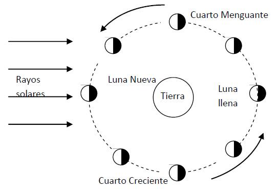 Fases De La Luna Dibujos