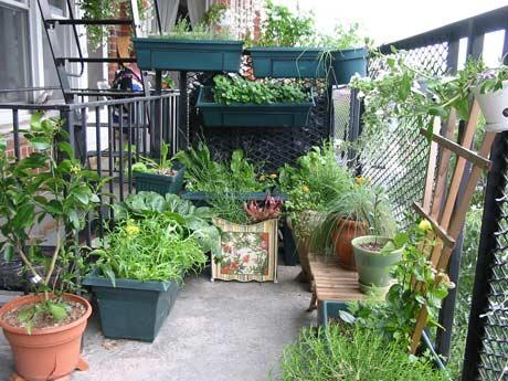 pamba boma going green balcony gardens