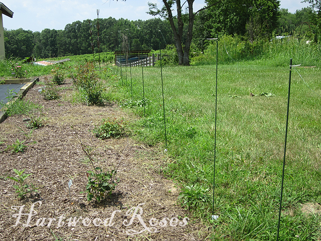 Hartwood roses experimenting with deer fencing for Fishing line deer fence