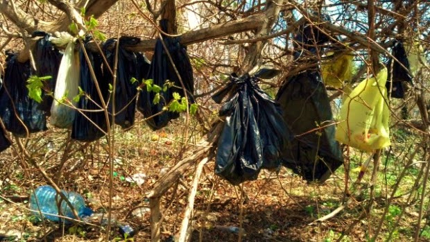 Photo of black bags contained the dead bodies of kittens and cats in Yonkers NY