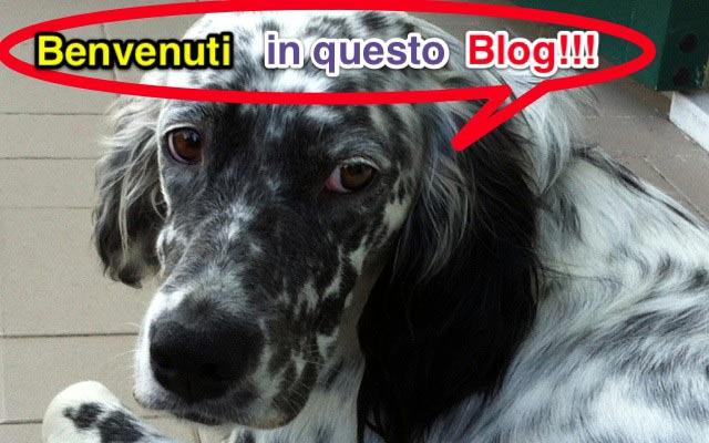 il trova blog presenta ho adottato un cane