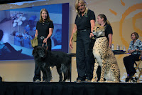 2012 American Veterinary Medical Association convention in San Diego