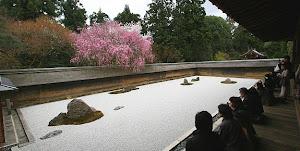 Grădină zen primăvara