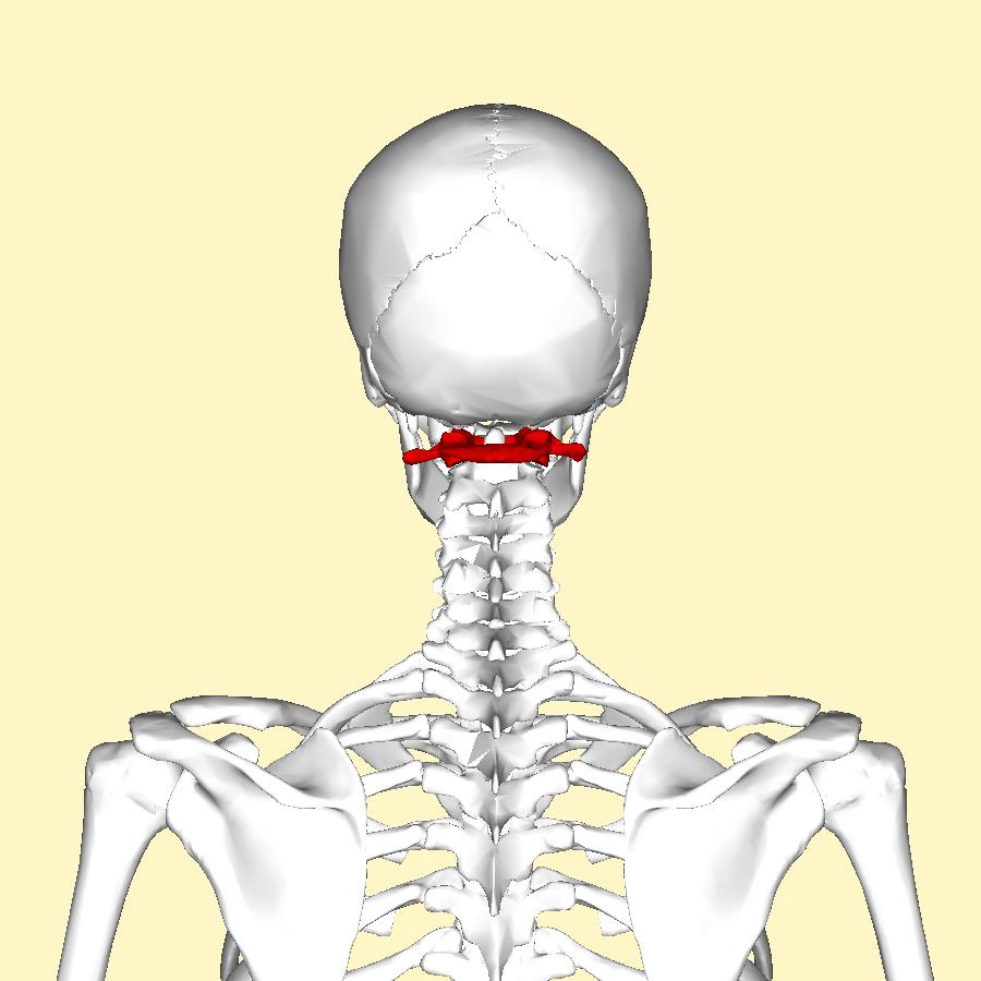 Blog Anatomía