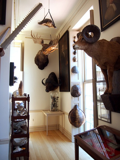 Joseph Steward S Museum Of Natural And Other Curiosities