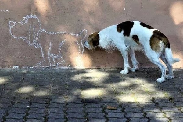 Cute dogs - part 8 (50 pics), funny dog sniffing dog picture on wall