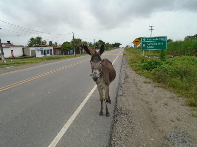 http://www.blogdofelipeandrade.com.br/2015/08/vigilancia-sanitaria-apreende-animais.html