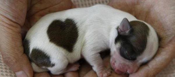 Các em cún đáng yêu chào đón thế giới mới
