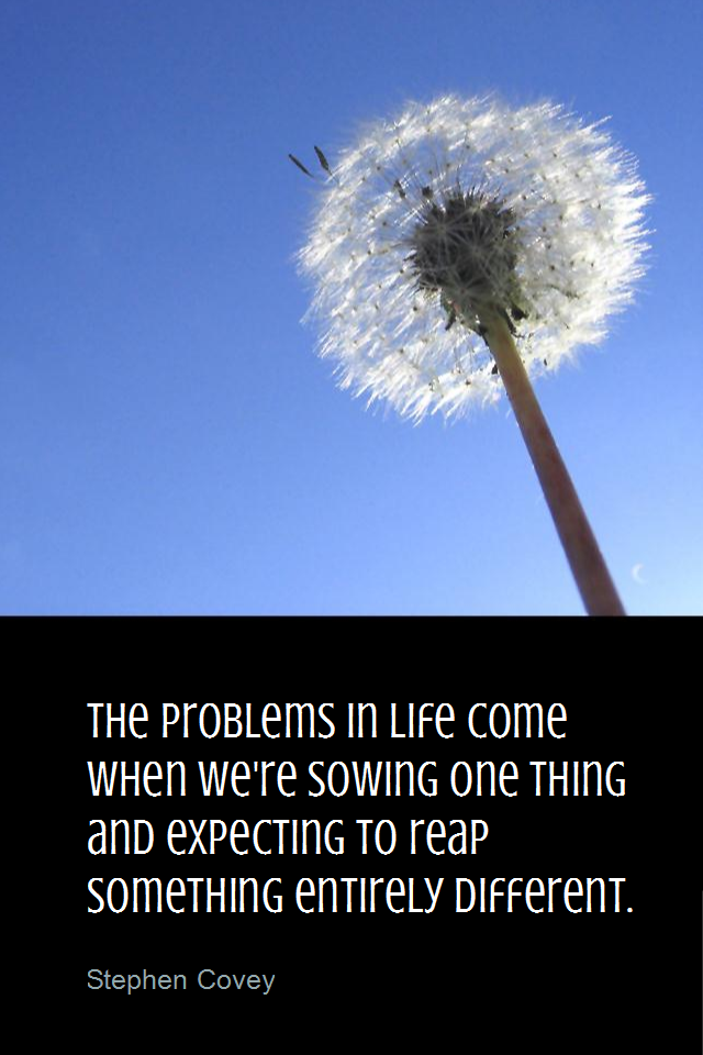 visual quote - image quotation for LAW OF ATTRACTION - The problems in life come when we're sowing one thing and expecting to reap something entirely different. - Stephen Covey