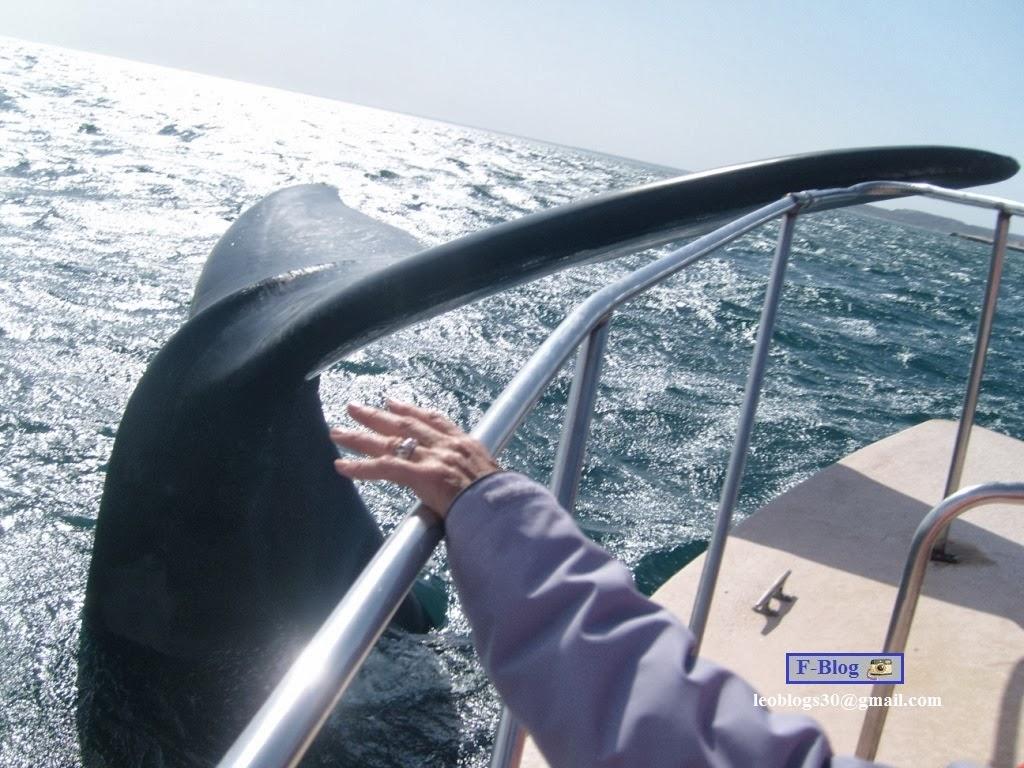 Fotos de ballenas en Puerto Madryn, Península Valdes