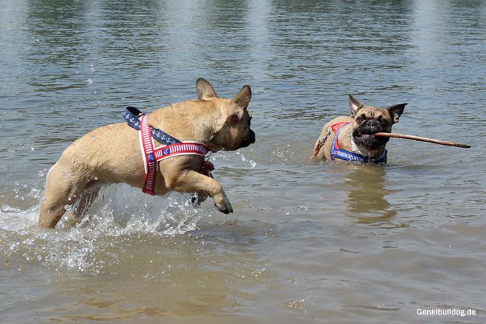 Mit Hund baden am Rheinstrand