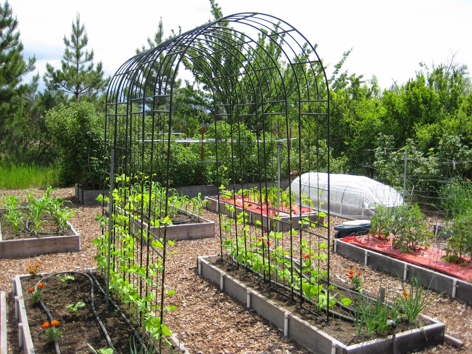 Beautiful Bean Trellis Ideas Part - 7: Pole Bean Trellis