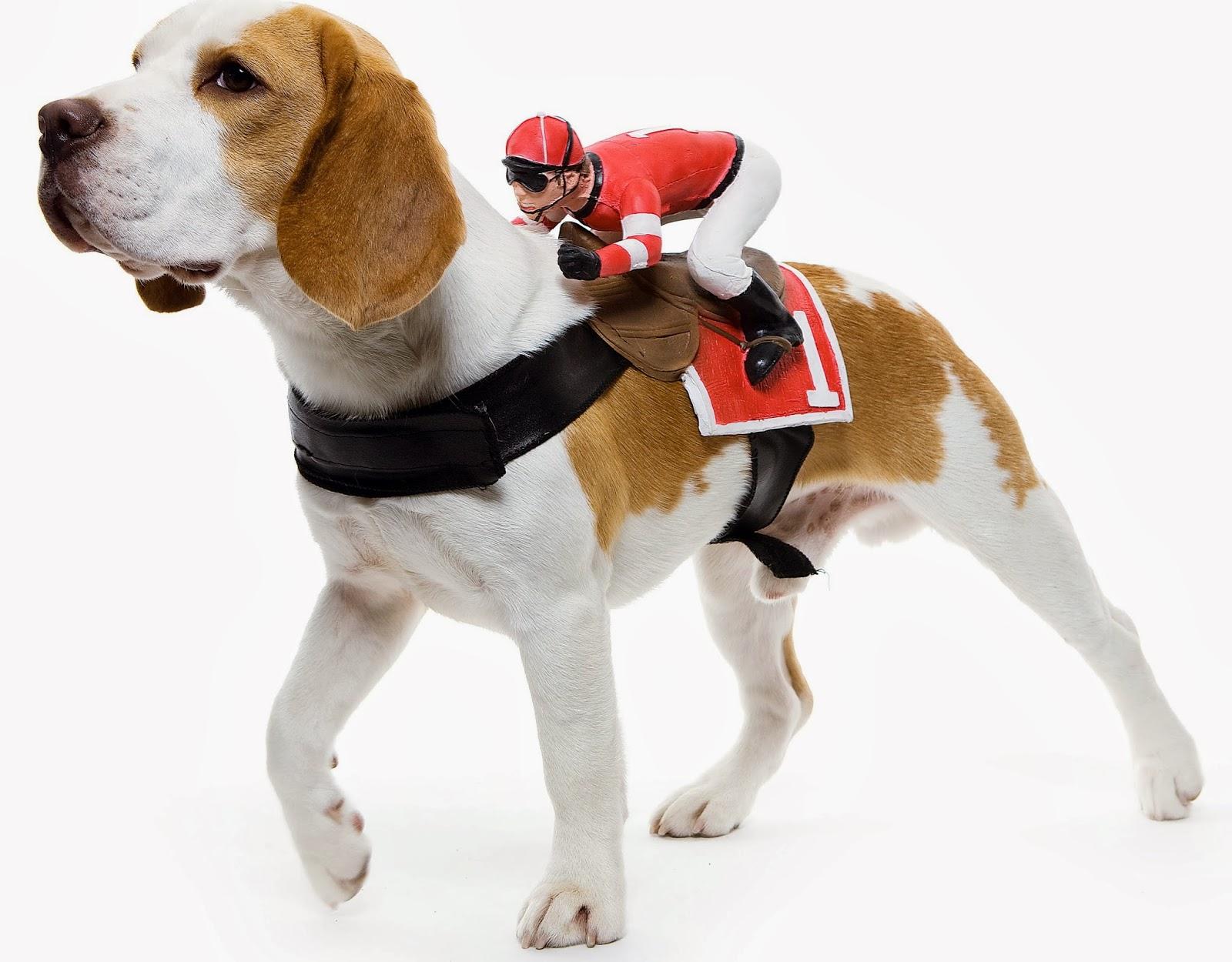 Dog Jockey Costume Uk