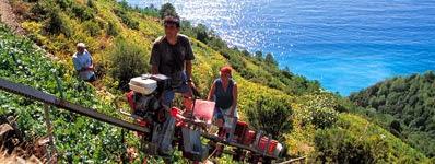 Green Italia - Verdi Liguri: terrazzamenti e assetto del territorio