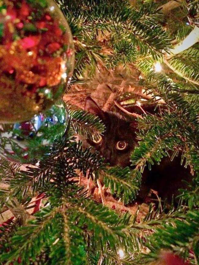 cats who mastered the art of hid and seek-8