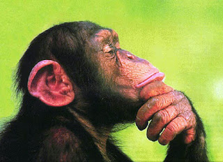 monkey thinking deeply and profoundly