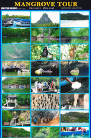 MANGROVE TOUR PACKAGE (8 ADULT)