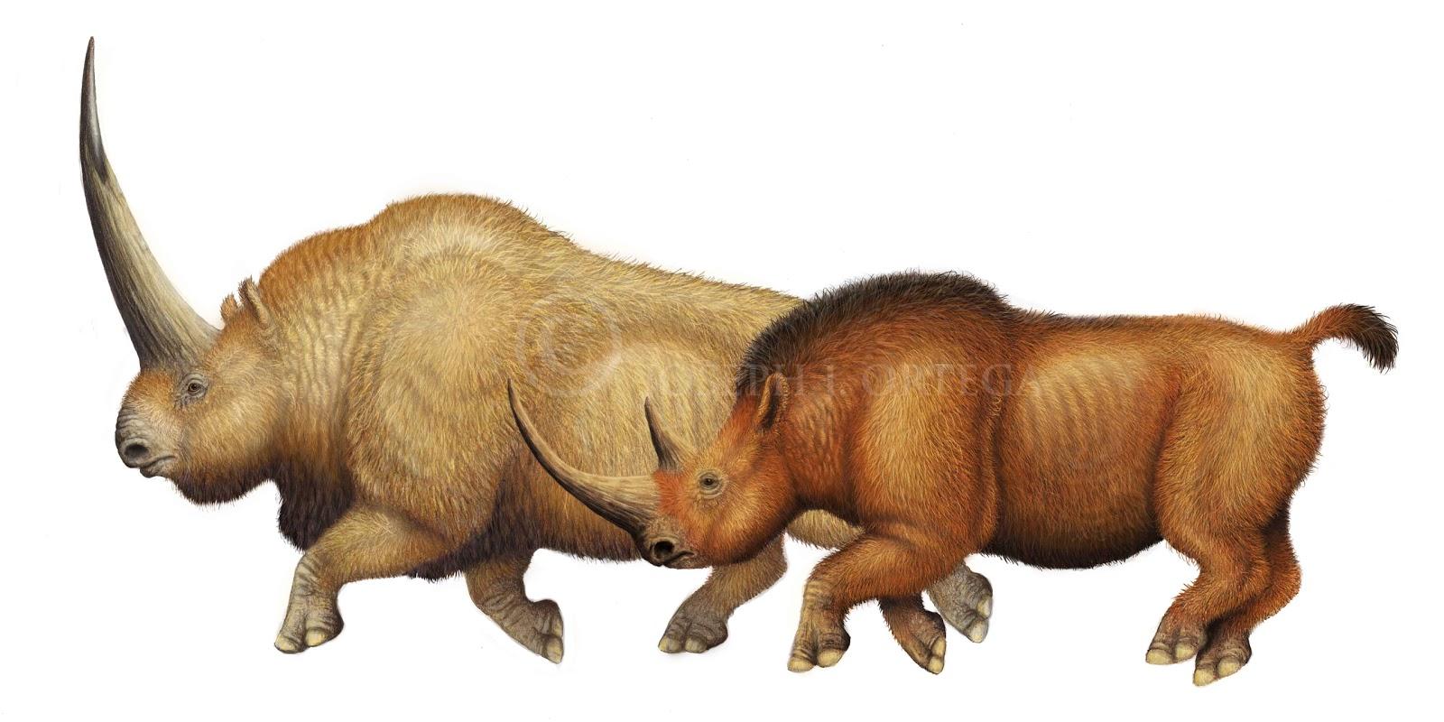Elasmotherium sibiricum  Wikidata