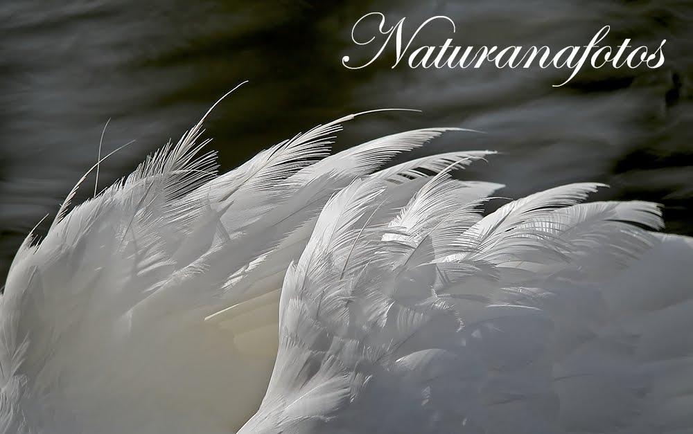 NATURANAFOTOS