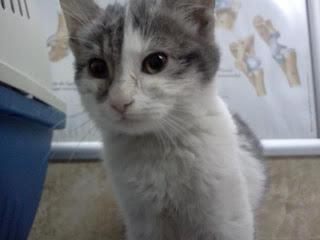 Pisica haioasa Kitty spre adoptie 2