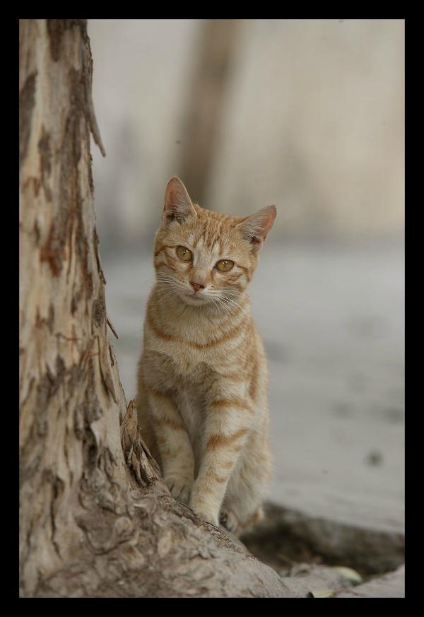 al azem palace syria cats
