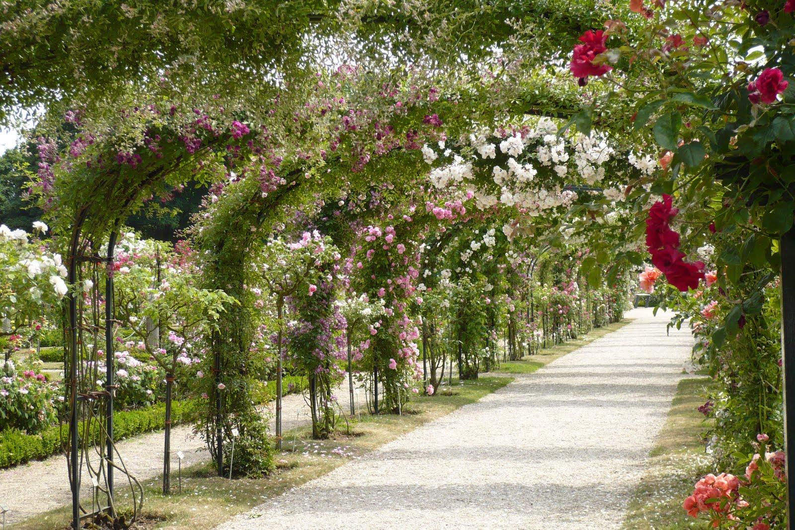 Le Jardin De Pacalou Un Jardin De Roses