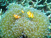 #8 Coral Reef Wallpaper